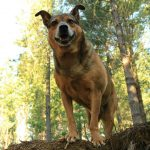 Honor the Pets in Your Life with the Gift of a Tree