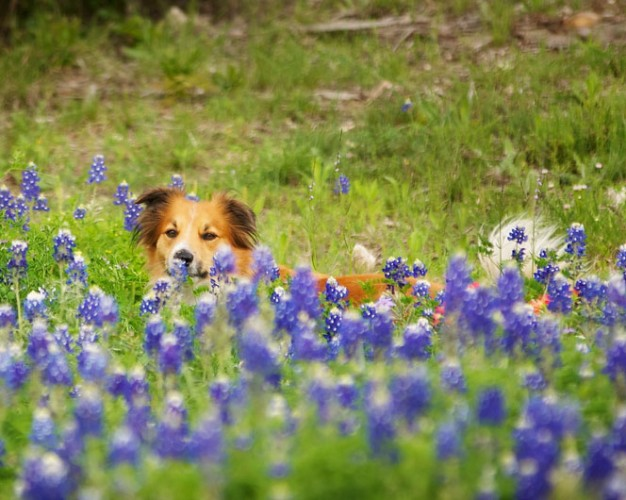 Your Dog's Springtime Checklist