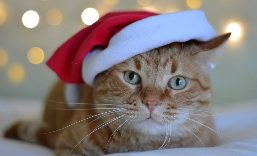 12 Last Minute Gift Ideas for Cat Lovers